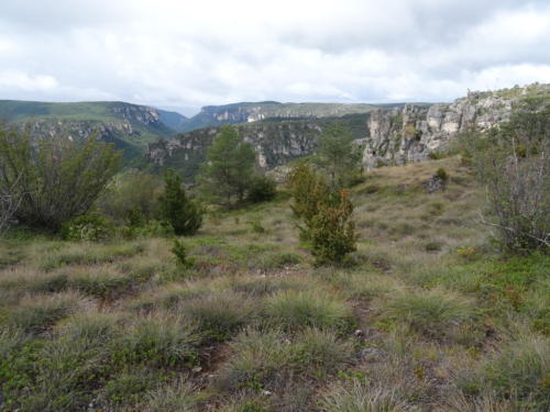 Le paysage des causses