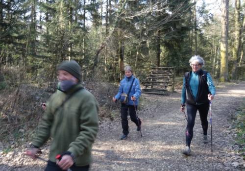 Marche nordique dans les bois.